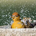 Summer Tanager Making a Splash in November by Bonnie T.  Barry