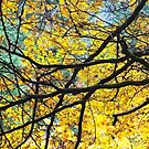 Nature's Stained Glass Window by Tim Haynes