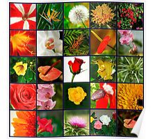 Square collage of 25 image of flowers Poster