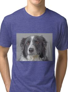 Border Collie Dog Portrait Tri-blend T-Shirt