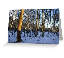 Winter Woods at Castle Fraser Greeting Card