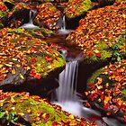 ROARING FORK,AUTUMN by Chuck Wickham
