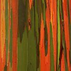 Hawaiian Eucalyptus by James Eddy