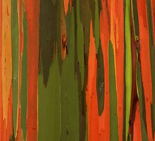 Hawaiian Eucalyptus by James Eddy