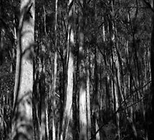 Scary Trees- Back of Mount Lofty by Ben Loveday