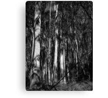 Scary Trees- Back of Mount Lofty Canvas Print