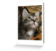 "Foster the Cat ""Looking Up"" Greeting Card"