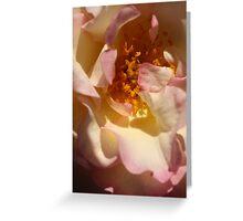 Rose Garden 14-15 Greeting Card