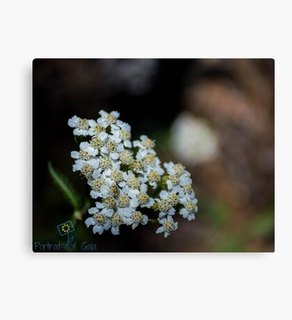 White Hearted Flowers Canvas Print