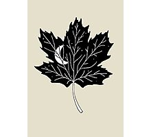Moon Leaf- Maple Photographic Print