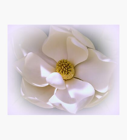 Southern Magnolia Photographic Print