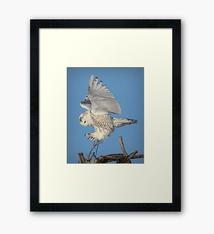 Graceful landing Framed Print