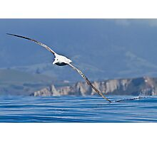 Wandering Albatross - New Zealand Photographic Print