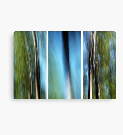 the three trees Canvas Print
