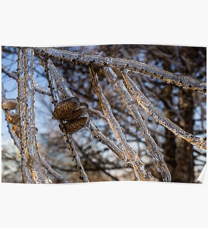 Christmas Decorations by Mother Nature - Three Pine Cones Encapsulated in Ice Poster