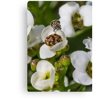 Small flowers small insects Canvas Print
