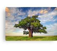 New Beginnings Canvas Print
