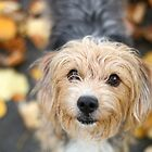 Dog in Autumn Leaves III by GreyFeatherPhot