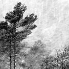 9.11.2016: Pine Trees in Snowstorm by Petri Volanen
