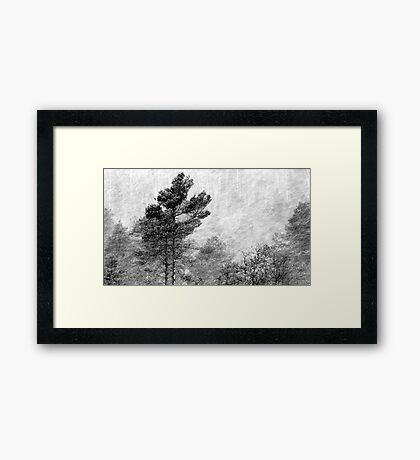 9.11.2016: Pine Trees in Snowstorm Framed Print