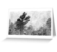 9.11.2016: Pine Trees in Snowstorm Greeting Card