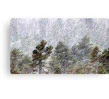 9.11.2016: Pine Trees in Snowstorm II Canvas Print