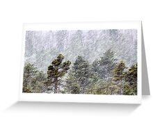 9.11.2016: Pine Trees in Snowstorm II Greeting Card