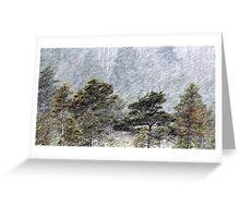 9.11.2016: Pine Trees in Snowstorm III Greeting Card