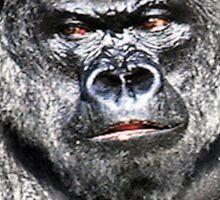 Gorilla - Who's The Daddy Sticker