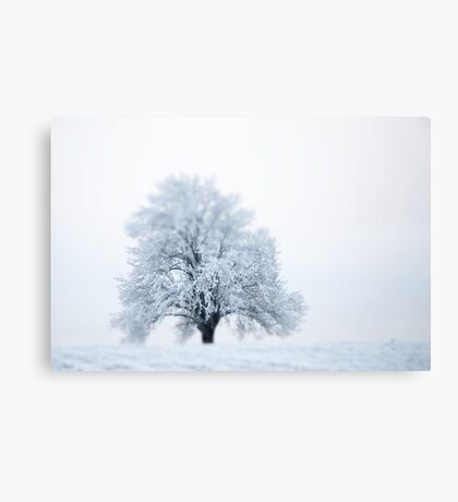 Winter in Norway Canvas Print