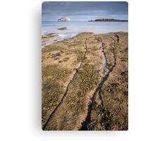 Seacliff Fissures Canvas Print