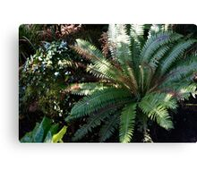 The Jungle of Heligan Canvas Print