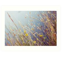 Lakeside reeds Art Print