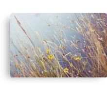 Lakeside reeds Metal Print