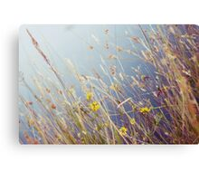 Lakeside reeds Canvas Print