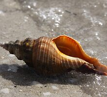 Sea Shells By The Sea Shore by Stuart Daddow Photography