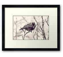 Head Into The Wind Framed Print