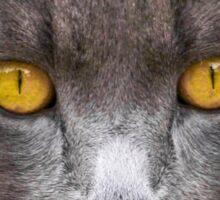 Bright Eyes Sticker