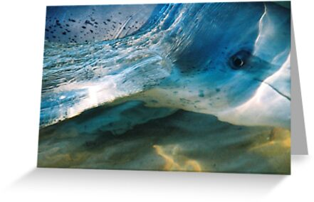 The Dolphin by Marilyn Harris