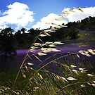 Fields of Purple and Gold by turningjapanese