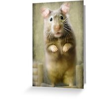 Paws prints Greeting Card
