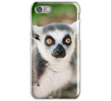 Lemur iPhone Case/Skin