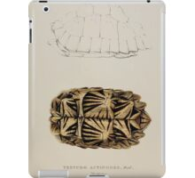 Tortoises terrapins and turtles drawn from life by James de Carle Sowerby and Edward Lear 009 iPad Case/Skin
