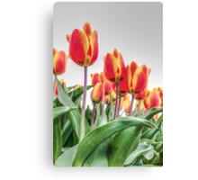 Dutch Tulips part 2 Canvas Print