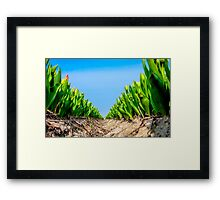 Dutch Tulips part 4 Framed Print