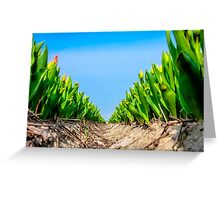 Dutch Tulips part 4 Greeting Card
