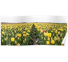 Dutch Tulips part 6 Poster
