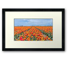 Dutch Tulips part 8 Framed Print