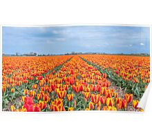 Dutch Tulips part 8 Poster