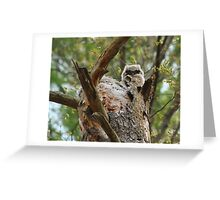 Great horned; the next generation Greeting Card